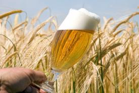 Onverkoopbaar bier wordt verwerkt tot veevoer