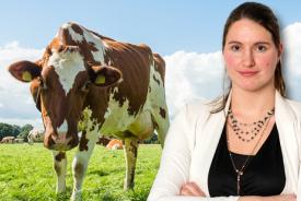 Onrustige week voor handel en melkveehouder