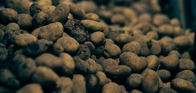 Vorst eist duizenden hectares in Canada - Inside Aardappelen - Boerenbusiness.nl