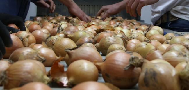 De vraag ontbreekt op de uienmarkt