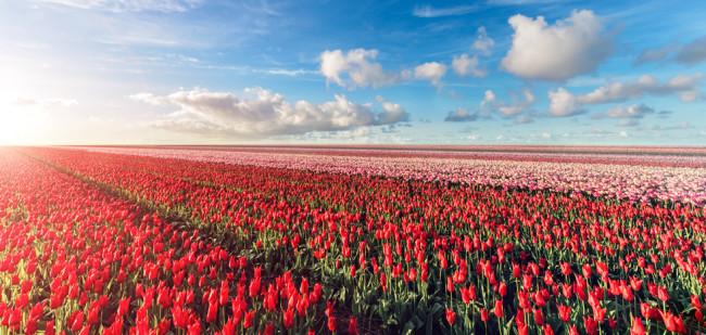Bollenboer koopt 162 hectare in Nieuw-Zeeland