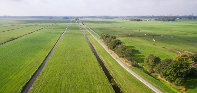 'Stikstofbeleid maakt grasland goedkoper'