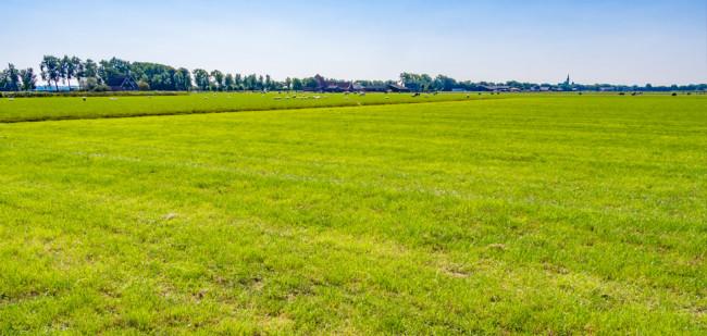Mysterie rond kale plekken in grasland