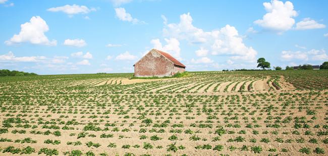 Belgisch landbouwbedrijf in 2018 iets groter