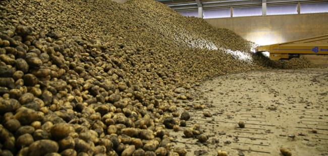 Forward pricing aardappelen