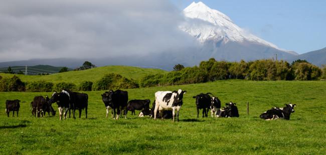 Agrarisch bedrijf minder in trek in Nieuw-Zeeland
