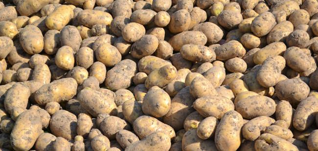 Vraag Afrika compenseert aardappelexport niet