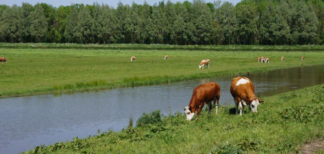 Hoogleraar: 'Schrap ook aantal natuurgebieden'