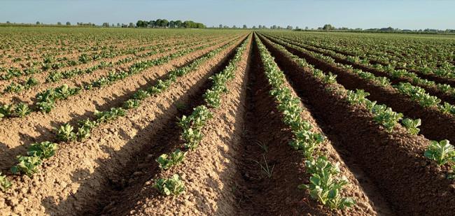 Farm Frites zoekt meerjarige verbintenis