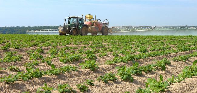 Schokkende trendbreuk in aardappelareaal
