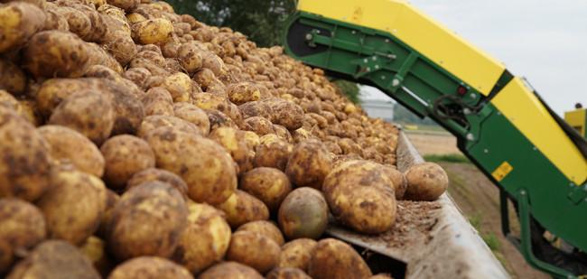Vroege aardappelen lopen nog achter op gemiddelde