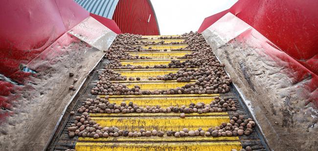 Droogte hakt in op groter Canadese aardappelareaal