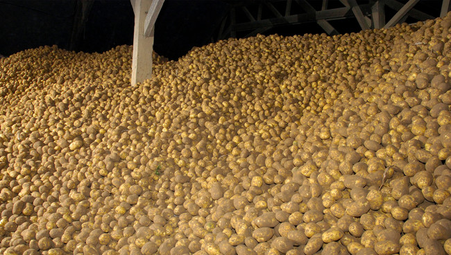 Franse verwerker schuwt vrije aardappel