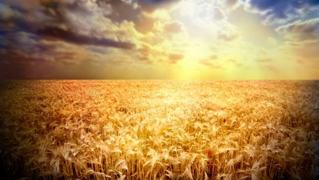 Regeneratieve landbouw, een hype?